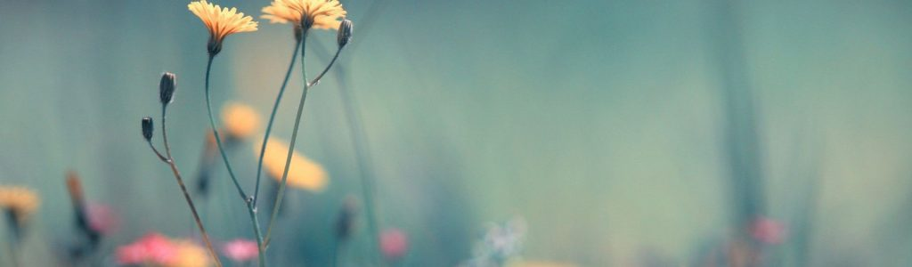 1 virág 1 (2)