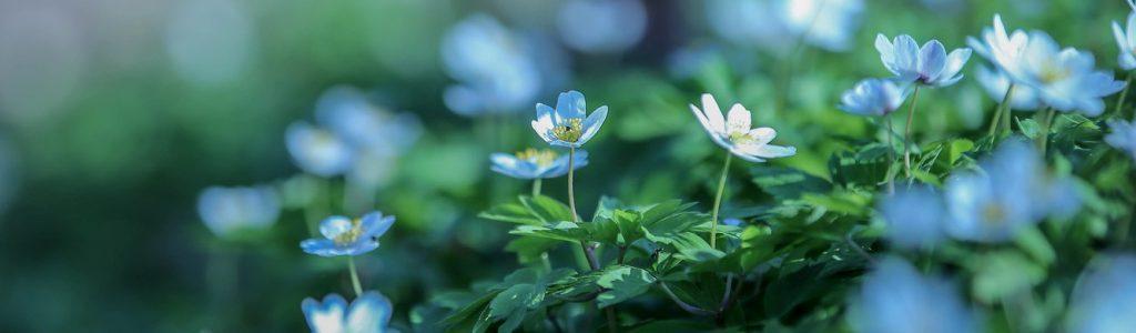 1 virág 13