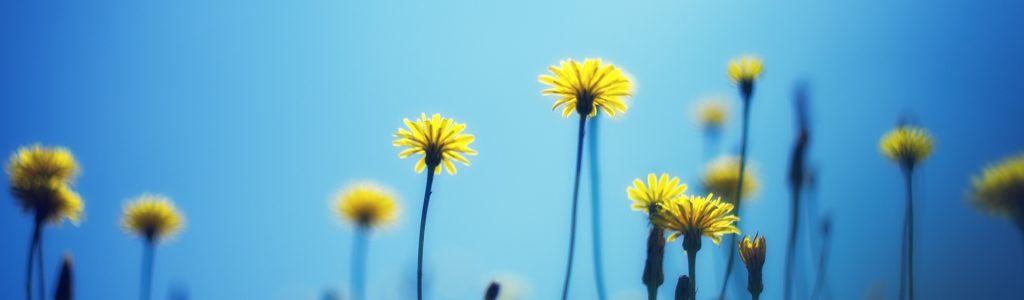 1 virág 3