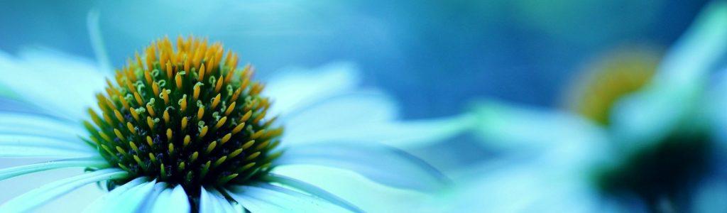1 virág 5